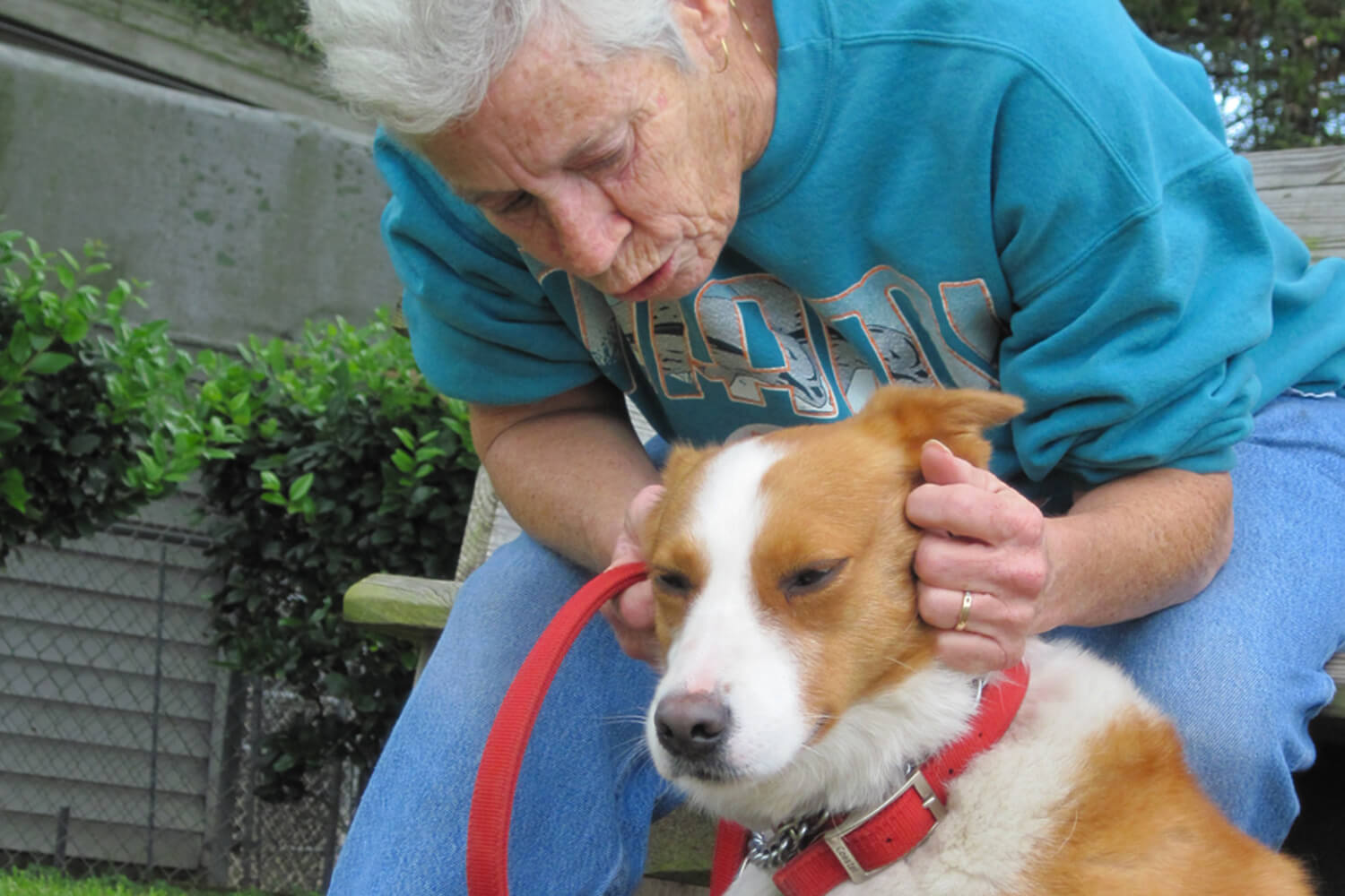 Maltreatment and Rescue of Pets